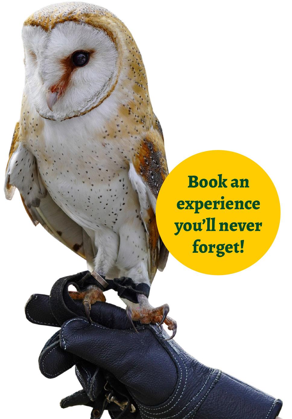 book-an-experience-owl