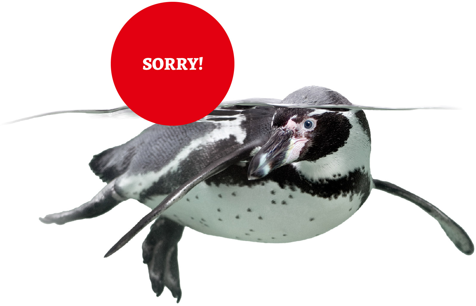 sorry-closed-penguin